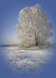 Solig vinterdag Arkivfoton