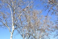 Solig vinterdag i Madrid Spanien Royaltyfri Foto