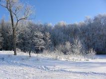 Solig vinterdag i parkera Royaltyfri Foto