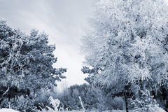 Solig vinterdag i skogen n5 Royaltyfria Foton