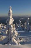 Solig vinterliggande Arkivfoton