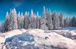 Solig vintermorgon i snöig bergskog Royaltyfri Fotografi
