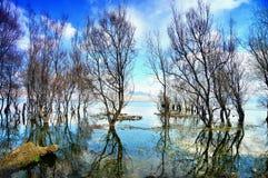 Soliga dagar under naturligt landskap, sjöar, träd arkivbild