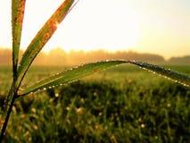 Soliga droppar av mist på gräs Royaltyfria Bilder
