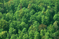soliga trän Arkivbilder