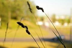 soligt daggräs Arkivbild