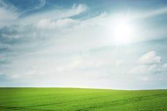 Soligt fält arkivbild