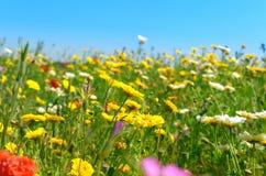 Soligt fält av wild blommor royaltyfri fotografi