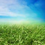 Soligt fält för vår Arkivbild