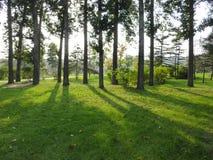 Soligt grönt träd Arkivfoto