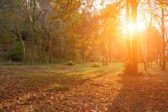 Soligt landskap för härlig höst med träd Royaltyfri Bild