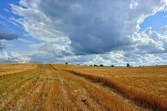 Soligt landskap för sommar med kornfältet i Ryssland Arkivbild