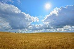 Soligt landskap för sommar med kornfältet i Ryssland Royaltyfri Fotografi