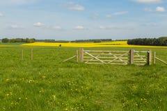 Soligt landskap för vår av historiska Stonehenge royaltyfri fotografi