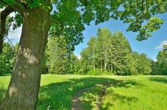 Soligt landskap i skogen Arkivfoton