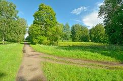 Soligt landskap i skogen Royaltyfria Foton