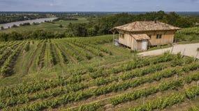 Soligt landskap med den lilla kojan i en vingård på tid för sen sommar arkivbilder