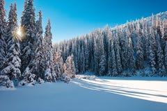 Soligt snöig skoglandskap royaltyfri foto