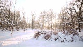 Soligt sn?ig landskap f?r vinter Snödrivor i tiden för nytt år för skog Nordligt kallt väder Härlig bakgrund för lager videofilmer