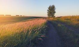 Soligt sommarlandskap med det jordlandsvägen, björkträdet och gräs exponerade av det varma ljuset av inställningssolen royaltyfria foton
