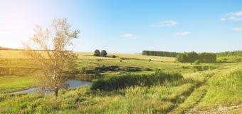 Soligt sommarlandskap med vetefältet och träd arkivbilder