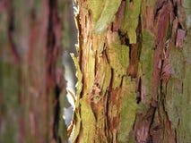 Soligt treeskäll Royaltyfri Bild