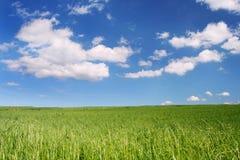 soligt under för blå fältsky arkivfoto