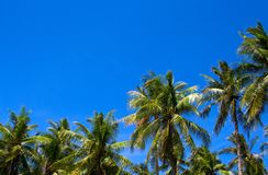 Soligt vändkretslandskap med cocopalmträd Tropisk palmträdkontur över himmel Royaltyfri Foto