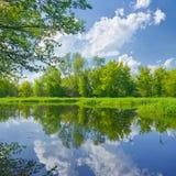 Soligt vårlandskap vid den Narew floden. arkivbild