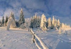 Soligt vinterlandskap i bergskog Royaltyfri Bild