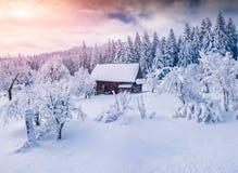 Soligt vinterlandskap i bergskogen Arkivbild
