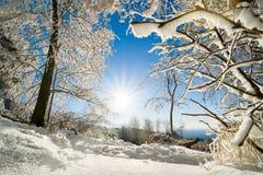 Soligt vinterlandskap i snö Royaltyfria Foton
