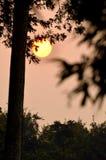 Solinställning bak ett träd Royaltyfri Foto