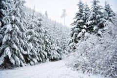 Solitário nevoento Fotografia de Stock