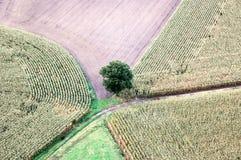 solitair δέντρο Στοκ εικόνα με δικαίωμα ελεύθερης χρήσης