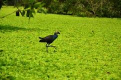 Solitair - eenzame vogel royalty-vrije stock afbeelding