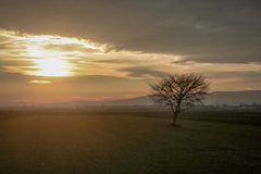 Silhouette of a lonely tree at sunset, beautiful pastel colors in the sky. royalty free stock photo