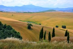 Solitaire bomen in Toscanië, Italië Royalty-vrije Stock Foto's