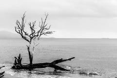 Solitaire boom door het water stock afbeelding