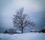 Solitaire boom in een sneeuw behandelde Stad Royalty-vrije Stock Afbeelding