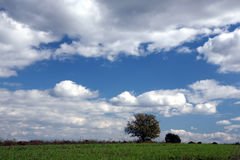 Solitaire boom en enorme hemel Stock Afbeeldingen