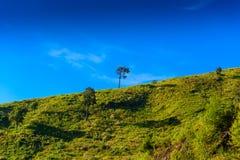 Solitaire boom op grasrijke heuvel en blauwe hemel met wolken in bac Royalty-vrije Stock Fotografie