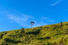 Solitaire boom op grasrijke heuvel en blauwe hemel met wolken in bac Royalty-vrije Stock Foto's