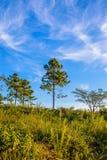 Solitaire boom op grasrijke heuvel en blauwe hemel met wolken in bac Stock Foto's