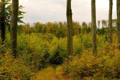 Solitaire boomstammen in kleurrijk land Royalty-vrije Stock Foto