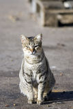 Solitaire cat. Isolated street cat iluminated with morning sunlight Royalty Free Stock Images