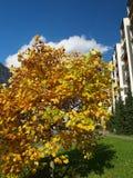 Solitaire tree Stock Photo