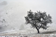 Solitaire tree on the foggy hill. A solitaire tree on the foggy hill covered by snow Royalty Free Stock Photo