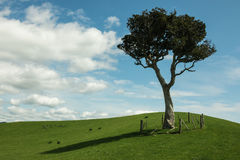 Solitaire tree on grassy hills Stock Image