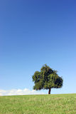 Solitaire tree on horizon Stock Photos